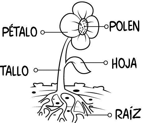 Actividades plantas primaria para imprimir, masquelibros