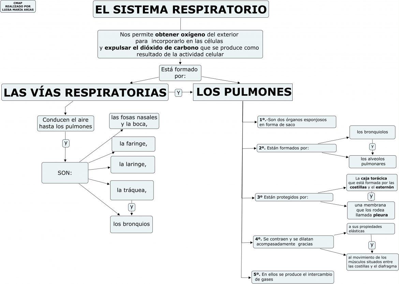 Aparato respiratorio primaria para imprimir, masquelibros