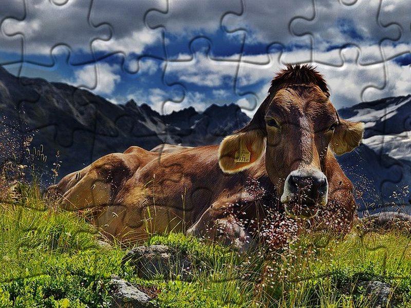 Convertir imagen en puzzle para imprimir, masquelibros