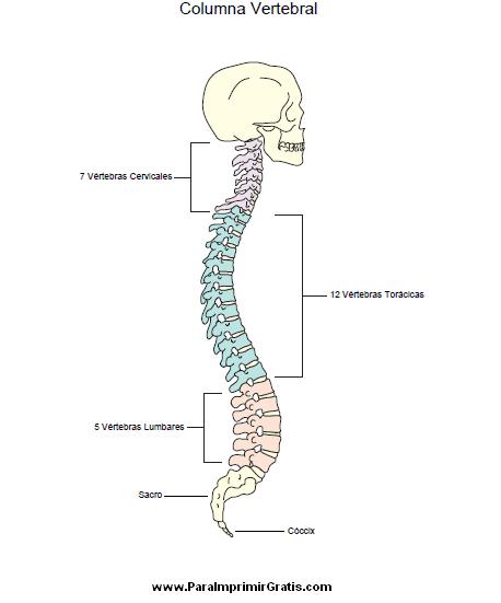 Dibujos del cuerpo humano para imprimir, masquelibros