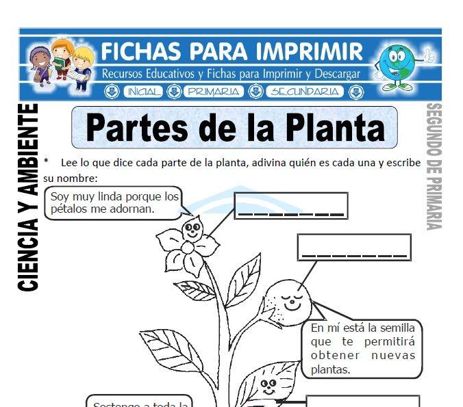 Fichas de plantas para imprimir, masquelibros