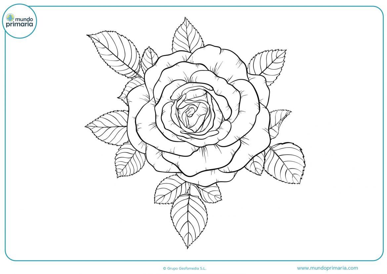 Flores para colorear e imprimir, masquelibros