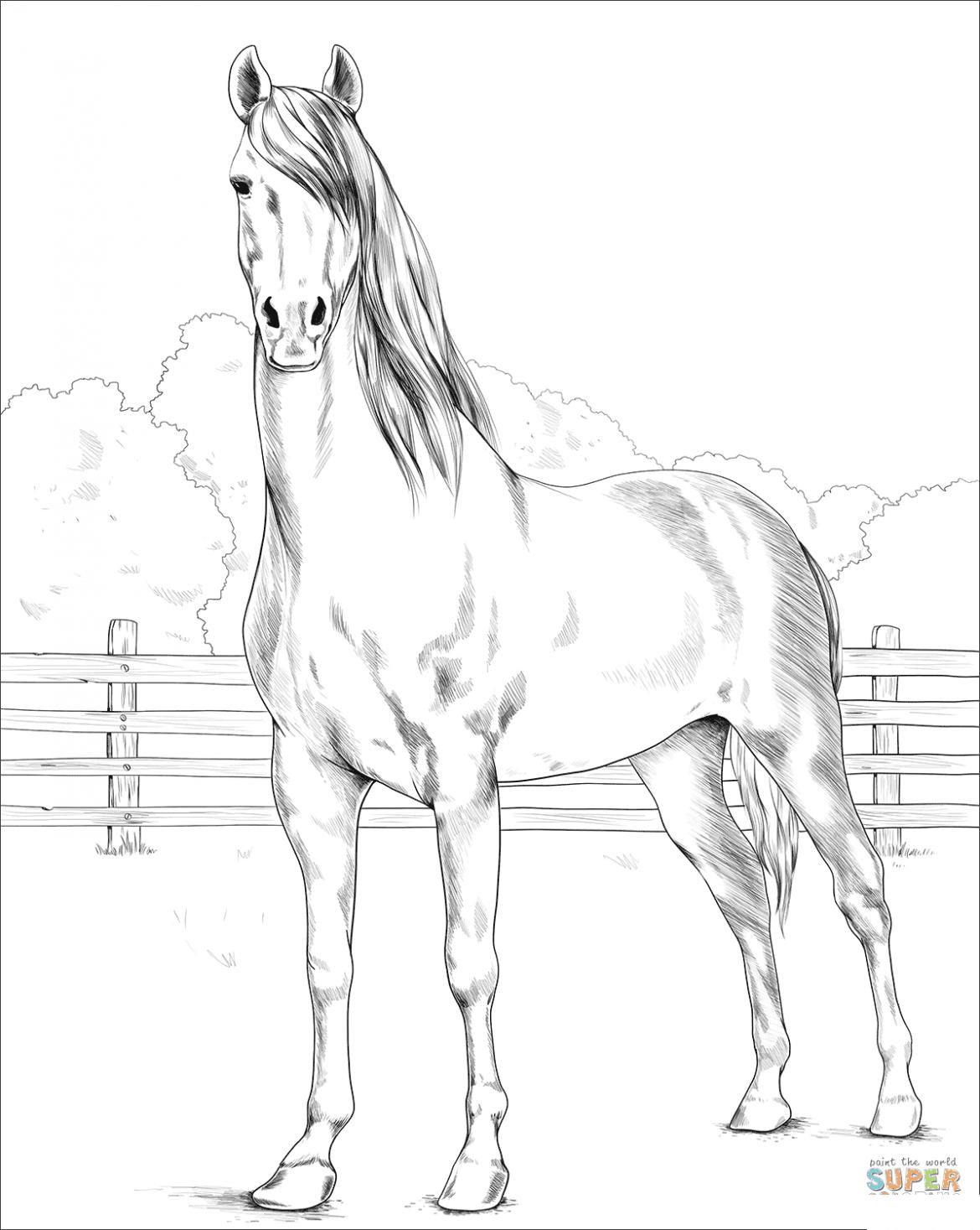 Fotos de caballos para imprimir, masquelibros