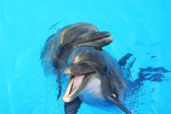 Fotos de delfines para imprimir, masquelibros
