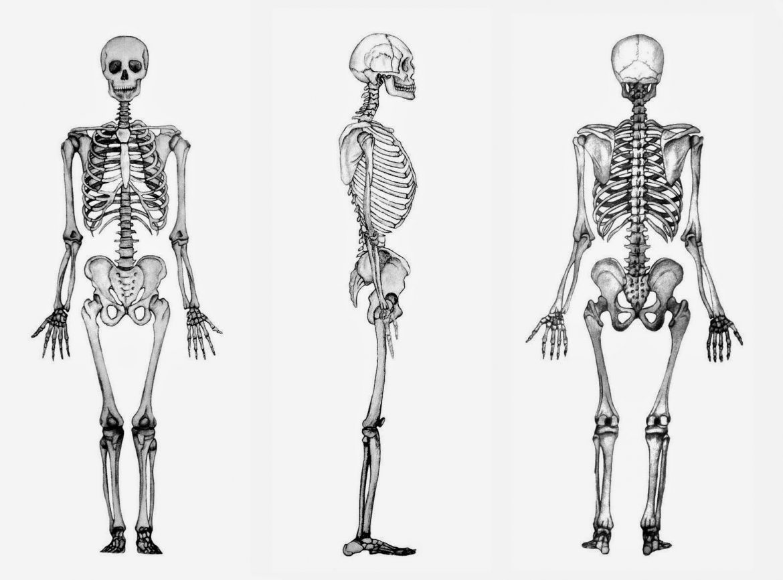 Plantilla esqueleto humano para imprimir, masquelibros